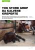 TOK STORE GREP DA KALVENE KREPERTE