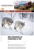 Bare halvparten av ulvekvoten er felt