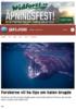Forskerne vil ha tips om haien brugde