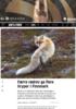 Færre rødrev ga flere liryper i Finnmark