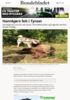Hannbjørn felt i Tynset