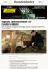 Ingvald rammes hardt av rovdyrtrøkket