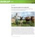 Mest mulig melk og kjøtt på minst mulig kraftfôr