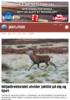 Miljødirektoratet utvider jakttid på elg og hjort