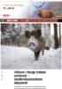 Villsvin i Norge trekker nordover - landbruksministeren bekymret